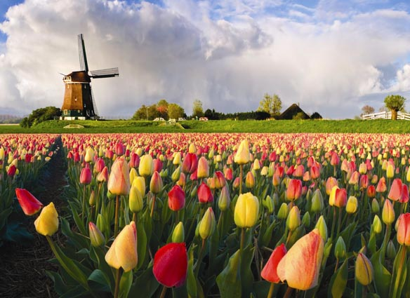 TULIPS of HOLLAND & BELGIUM RiverBoat Cruise